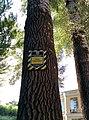 Група вікових дерев тополі білої (природно-заповідний фонд).jpg