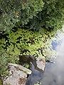 Дивовижна краса річки Рось у Корсунь-Шевченківському парку.JPG