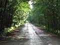Дорога к колонии-поселению - panoramio.jpg