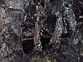 Дуова Пештера 07.jpg