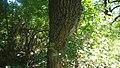 Дібрівський лісовий заказник 02.jpg