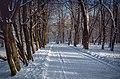 Зима. Снігові алеї.jpg