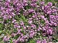 Квіти у саду.jpg