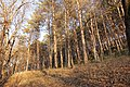 Кисловодский национальный парк. 1.jpg
