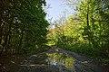 Лісова дорога.jpg
