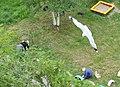 Маляры работают в детском саду г. Северодвинска (1).JPG