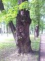 Михайловский сад.Хранительница сада летом..jpg