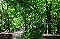Парк Берёзовая роща в Киеве. Фото 21.jpg