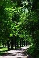 Парк Берёзовая роща в Киеве. Фото 42.jpg
