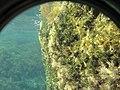 Подводные камни. Симеиз. Крым. Сентябрь 2012 - panoramio.jpg