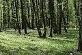 Теліженецький ліс DSC 0048.jpg