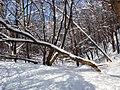 Украина, Киев - Голосеевский лес 246.JPG