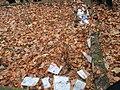 יער נחציולי, רודנה, או גלוגוב. קברי נרצחי השואה - מיהודי ז'שוב או לונצט (2).jpg