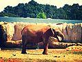فيل الحديقة.jpg