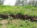 বিরাট রাজার ঢিবি Gobindogonj Gaibandha.jpg