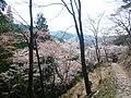 吉野山 奥の千本 Oku-no-sembon 2011.4.26 - panoramio.jpg
