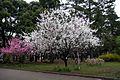 小金井公園 2010.04.11 6-28 - panoramio.jpg
