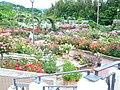 花の文化園 - panoramio.jpg