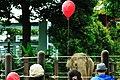 赤い風船 動物園 ゾウ 2010 (5153942144).jpg