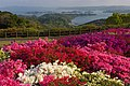 長串山公園 - panoramio - mahlervv.jpg