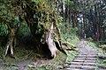 阿里山森林步道 Alishan Forest Trail - panoramio (1).jpg