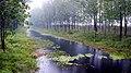 鸳鸯.立春.6.Ⅲ - panoramio.jpg