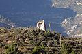 002 La Bestorre (Monistrol de Montserrat), des de l'estació.JPG