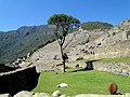 15 One Tree Machu Picchu Peru 2534 (15141456876).jpg