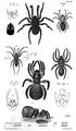 1844 BostonJournal NaturalHistory v4 illus6.png
