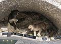 2015 Jaskinia Niedźwiedzia w Kletnie, modele zwierząt 01.JPG