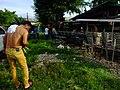 2016-09-28 Cockfighting in Buaya, Lapu-Lapu City, Cebu, Philippines ブアヤ村の闘鶏をする男たち DSCF6706.jpg