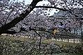 20160403 Himeji-Castle 3412 (26553496810).jpg