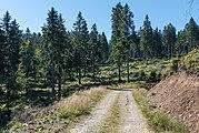 2016 Sucha Droga, Góry Bialskie, Sudety 1.jpg