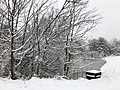 2018-03-21 12 56 05 Snow-covered trees and bushes in a swamp along a walking path in the Franklin Farm section of Oak Hill, Fairfax County, Virginia.jpg