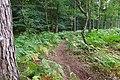 2019-08-17 Hike Hardter Wald. Reader-25.jpg
