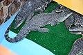 2019. Крокодиловый каньон в Ейске 006.jpg