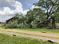 2020-06-05 14 37 46 Red Maple blown down by a severe thunderstorm along U.S. Route 50 (John Mosby Highway) in Arcola, Loudoun County, Virginia.jpg
