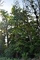46-236-5004 Verkhnia Bilka Park RB 18.jpg