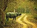 5. The fearless Rhino.jpg