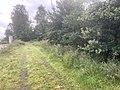 6040 Meerboom weg Otterstation, Otteroversteekplaats Fauna en Flora Passage Natuur Biodiversiteit Friesche Veen Cafe FreischeVeen.jpg