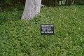 68-250-5004, Тюльпанове дерево.jpg