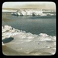 7 penguins + sea elephant 1913.jpg