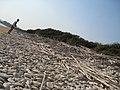 97100 Ragusa, Province of Ragusa, Italy - panoramio.jpg