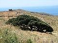 "A@a ""completely alone"" near Iera Moni Taxiarchon Serifos Greece - panoramio.jpg"