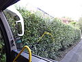 ARRIVA ROUTE 237 Chiddingstone Hoath. Very narrow lane. This is the position of the left mirror pushing the hedge back (10296590466).jpg