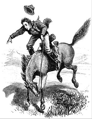 Cayuse horse - A bucking cayuse, from an 1873 engraving