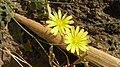 A Ylow Flowers Grass In Jungle.jpg