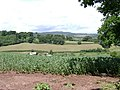 A field of beans beside Holcombe Down Road - geograph.org.uk - 1353173.jpg