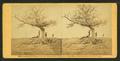 A lone grave on battle-field of Antietam, by Gardner, Alexander, 1821-1882.png
