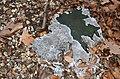 A strange type of mushroom is covering this old trunk at Sonsbeek Arnhem - panoramio.jpg